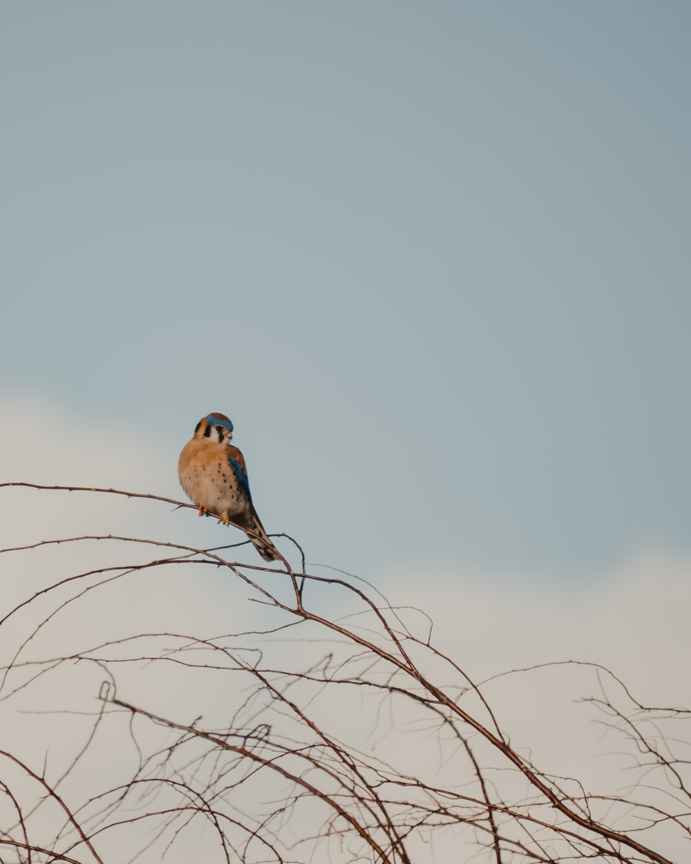 brown bird perched on brown tree branch during daytime