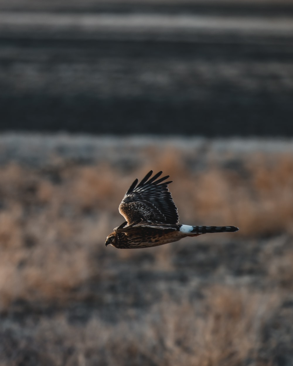 brown and black bird flying during daytime
