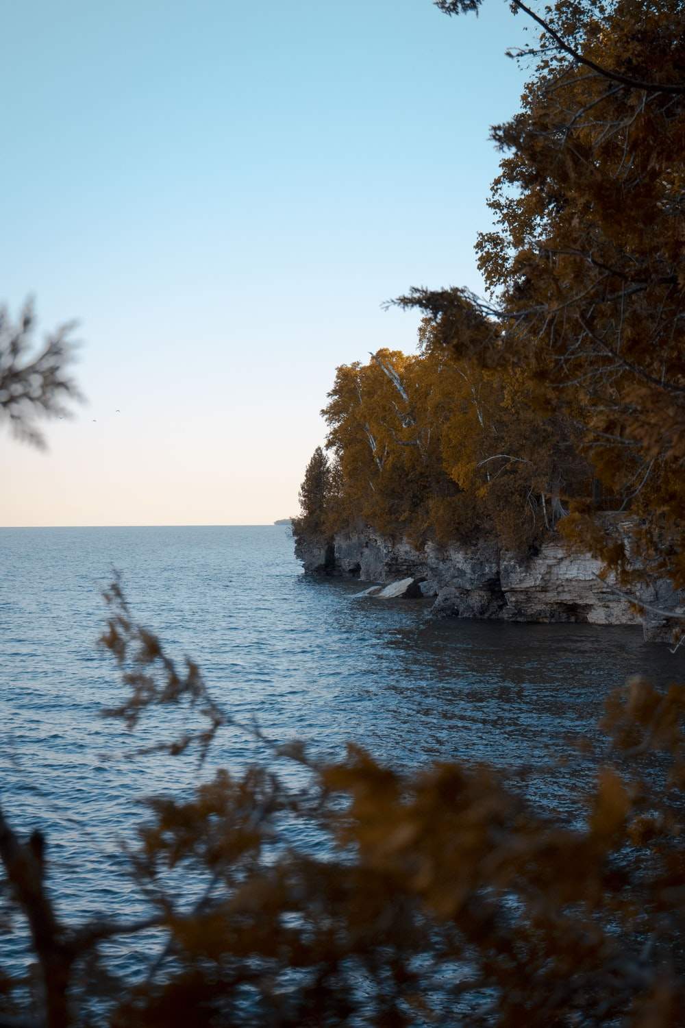 brown trees on rocky shore during daytime