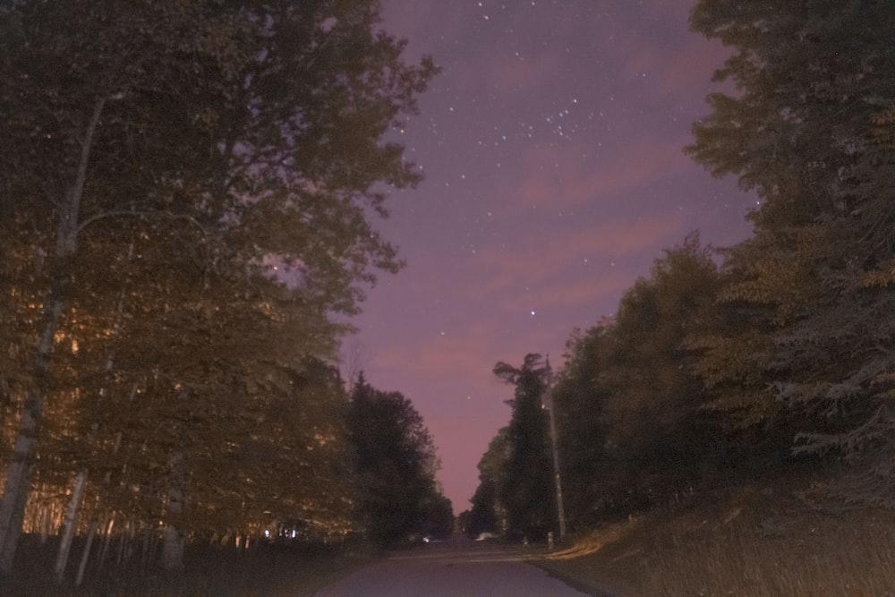 gray asphalt road between trees during night time