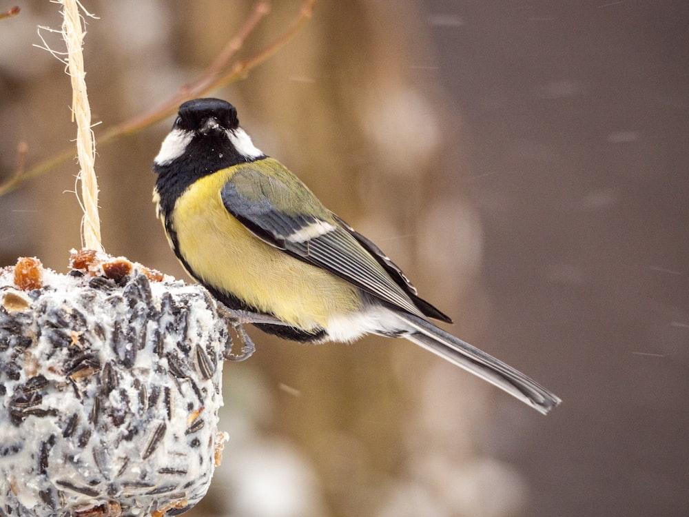 yellow black and white bird on white and black bird feeder