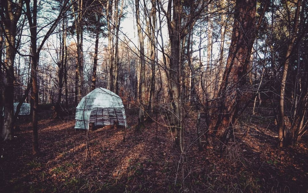white and gray tent in the middle of the forest