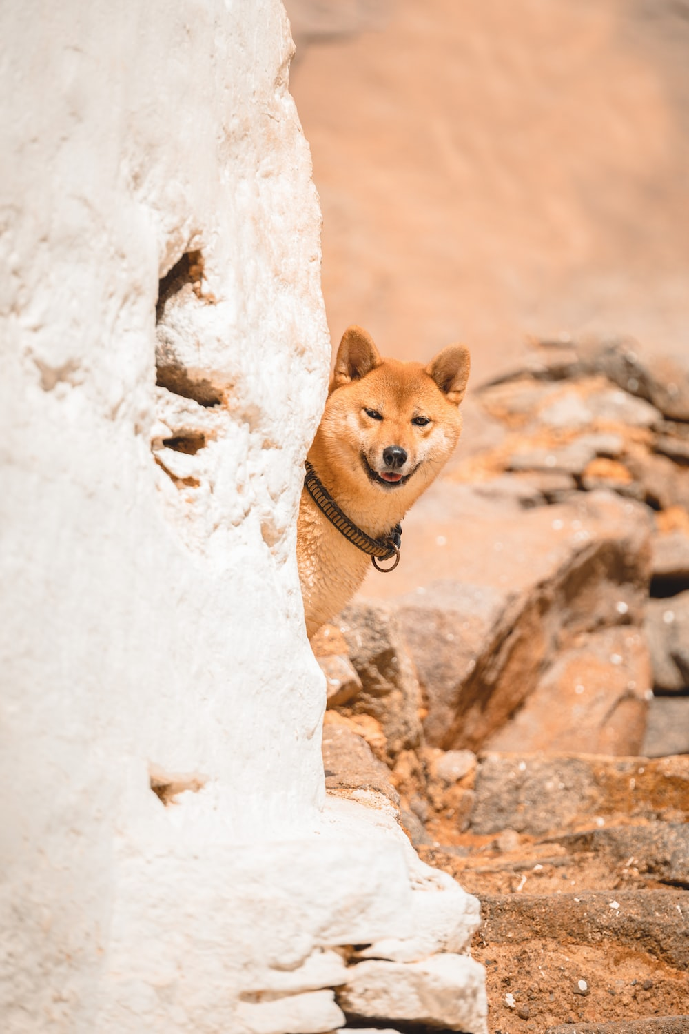brown and white short coated dog on brown rock