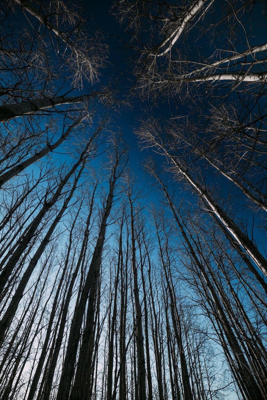 bare trees under blue sky during daytime