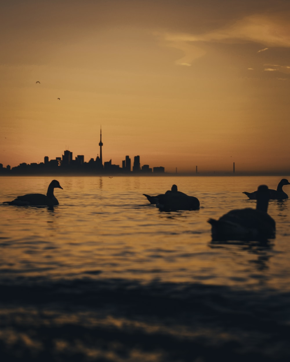 silhouette of birds on water during sunset