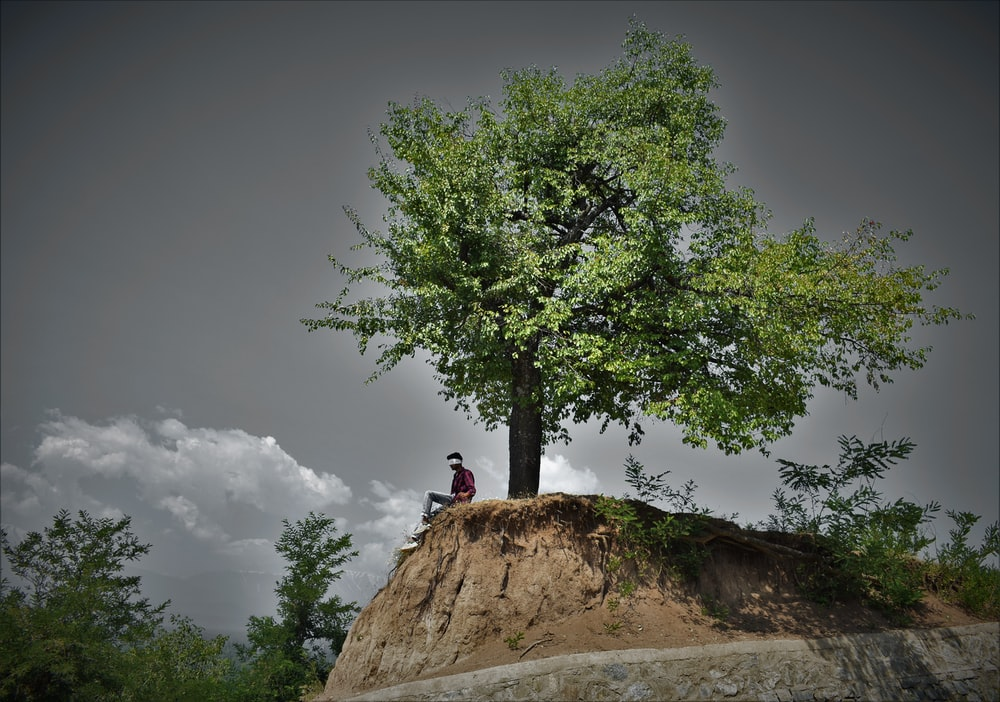 man in black shirt sitting on brown rock near green tree under gray sky during daytime