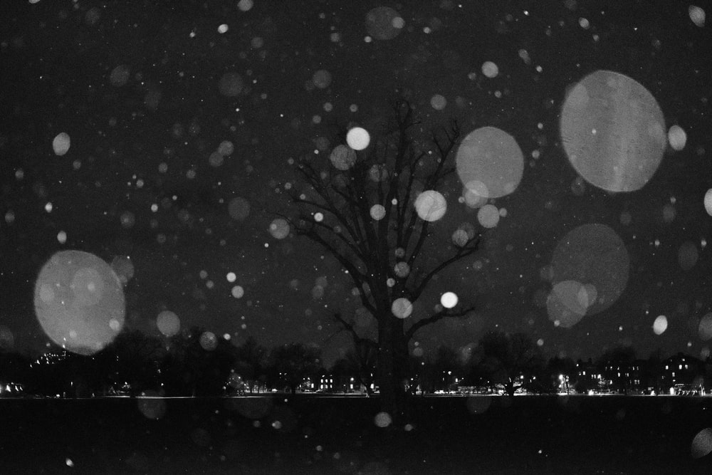 grayscale photo of tree with water droplets