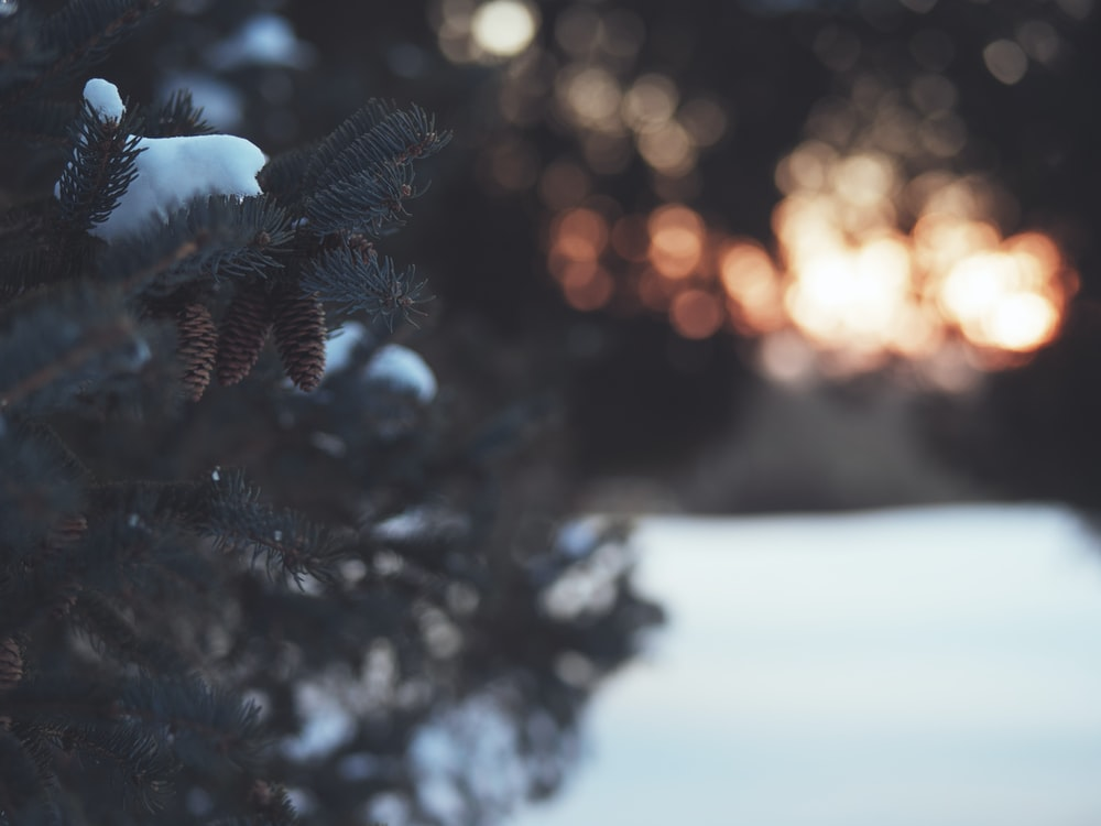 green pine tree covered with snow during sunset