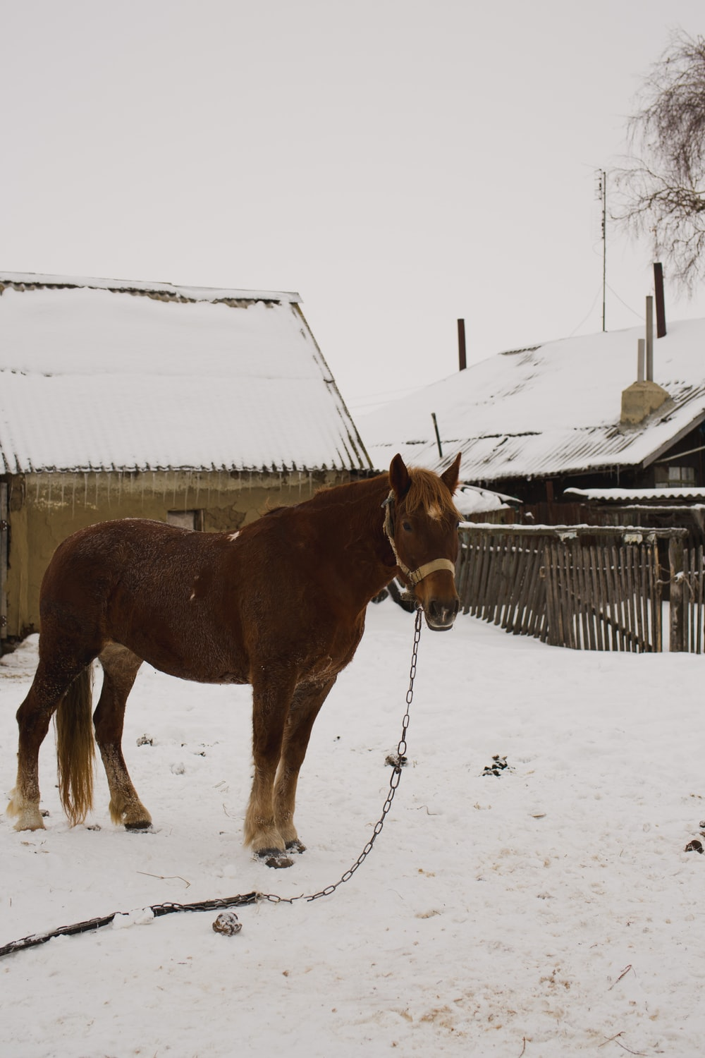 brown horse on snow covered ground during daytime