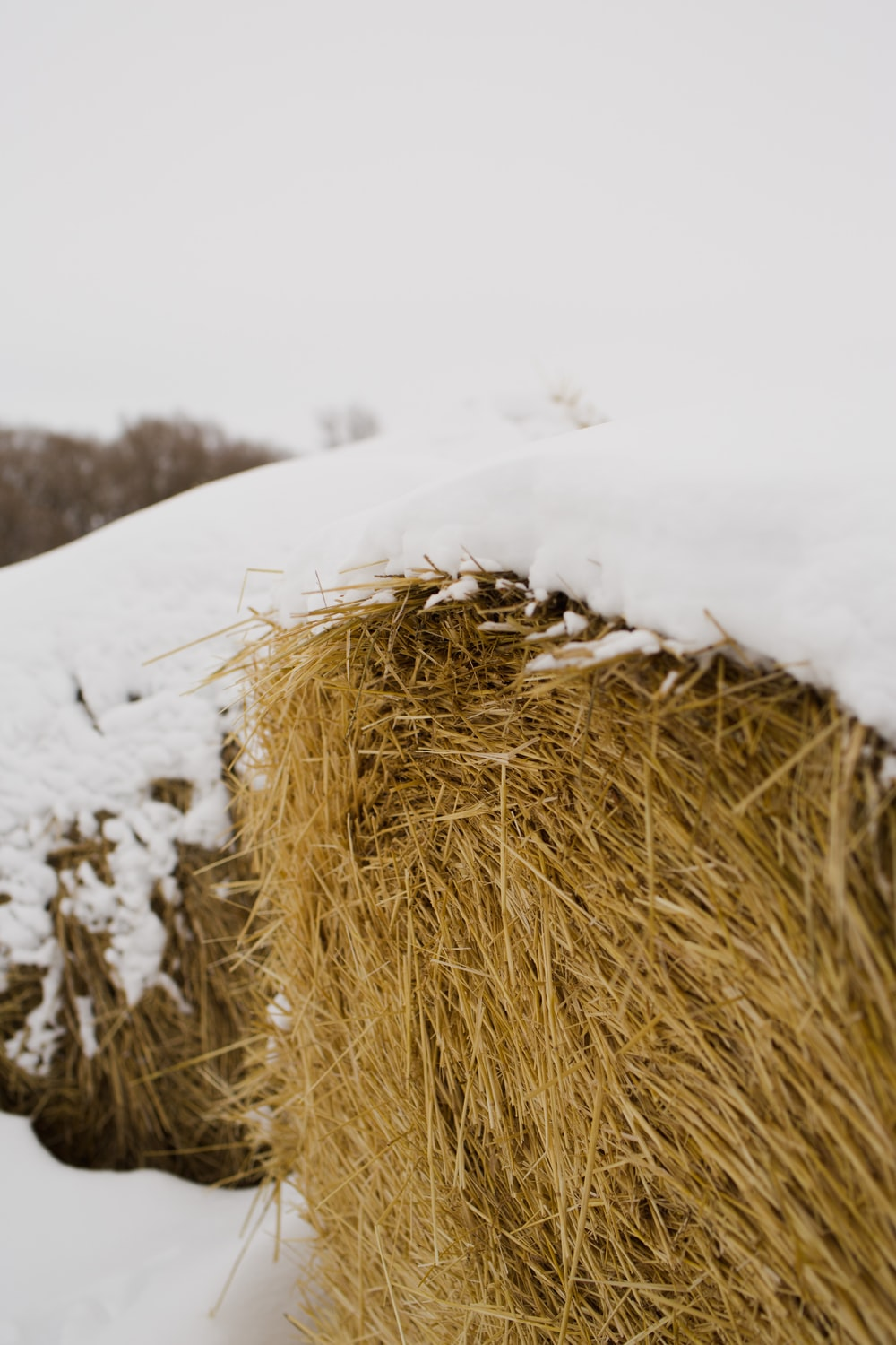 brown grass on snow covered ground during daytime