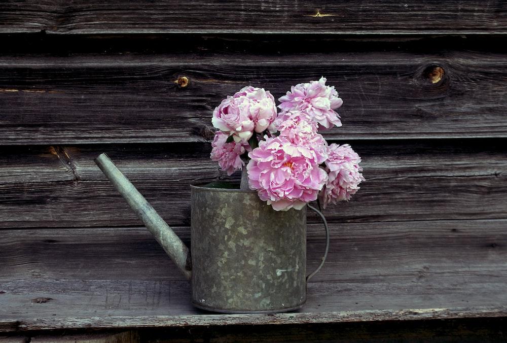 pink flowers in gray steel watering can
