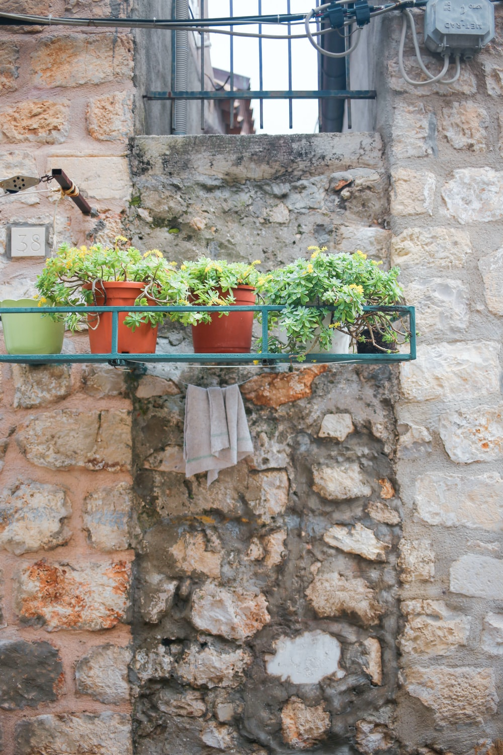 green potted plants on brown concrete wall