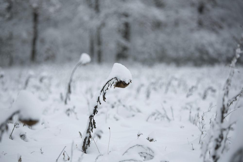 white snow on brown stem
