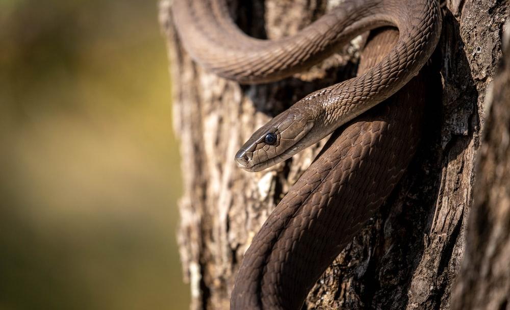 brown snake on brown tree trunk