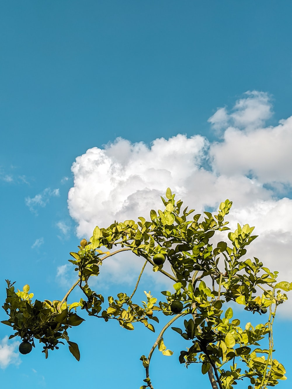 green leaved tree under blue and white sunny cloudy sky during daytime