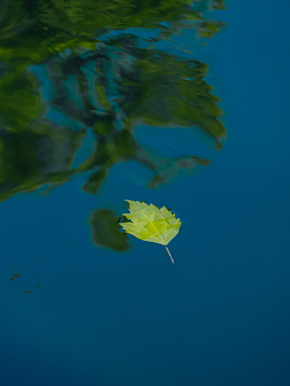 green leaf floating on water