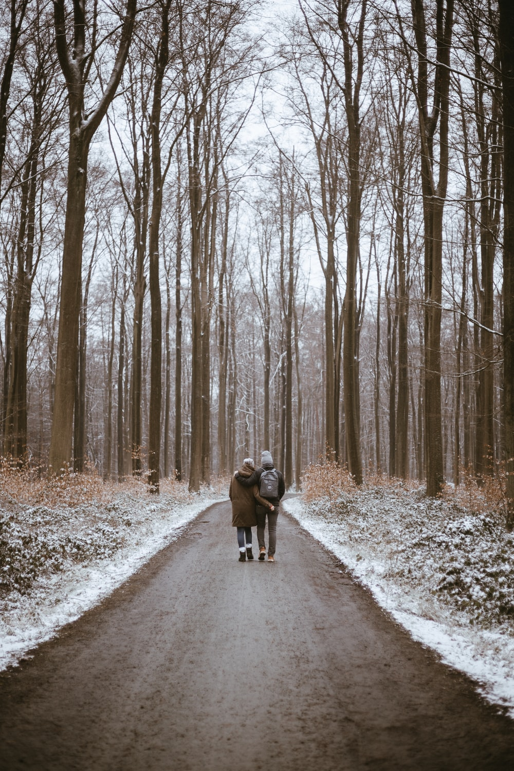 2 dogs running on road between bare trees during daytime