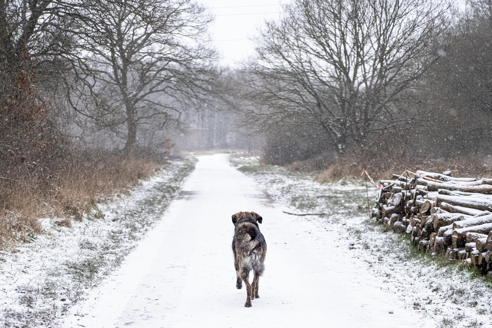 brown dog walking on snow covered road during daytime