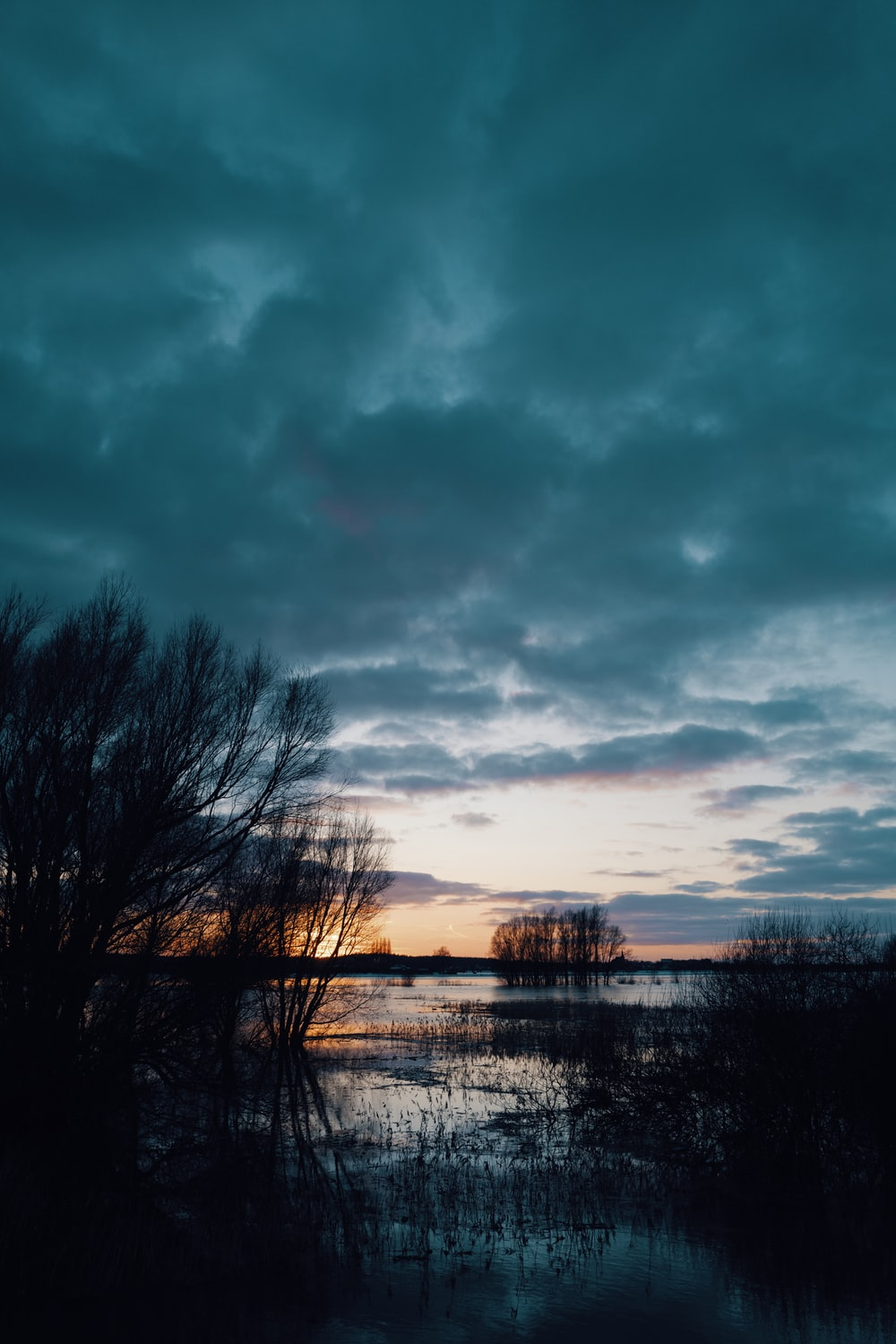 bare trees near body of water under cloudy sky during daytime