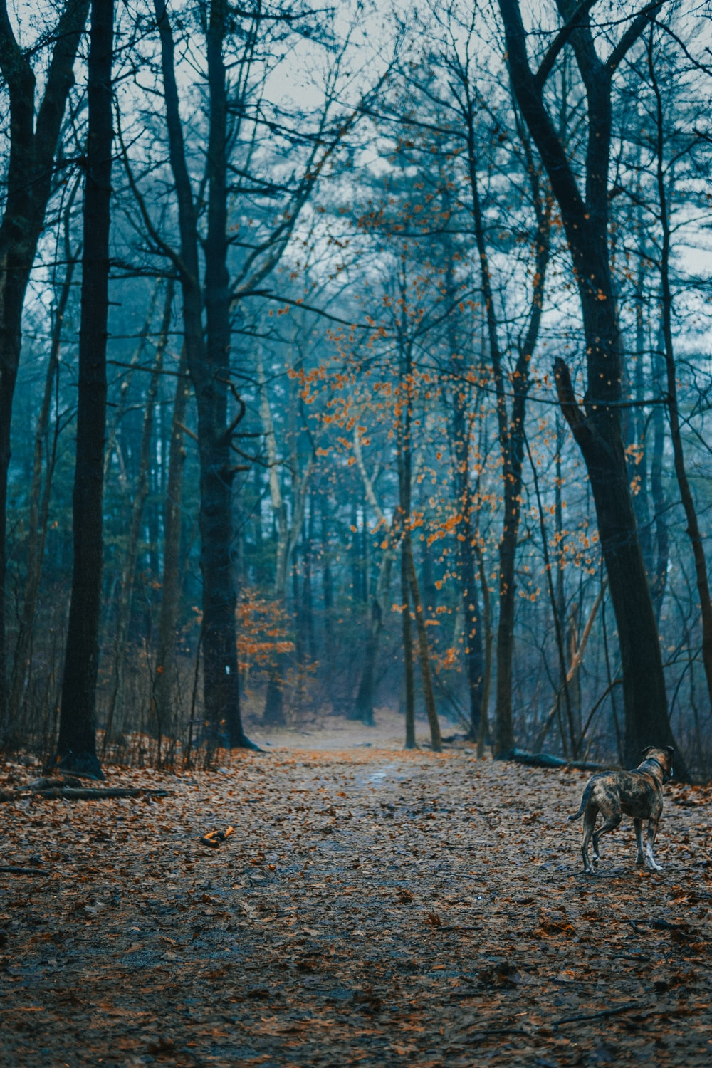 brown and black dog walking on forest during daytime