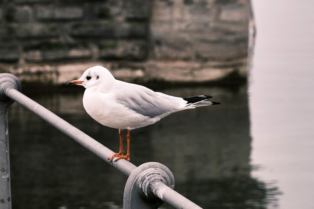 white bird on gray metal bar