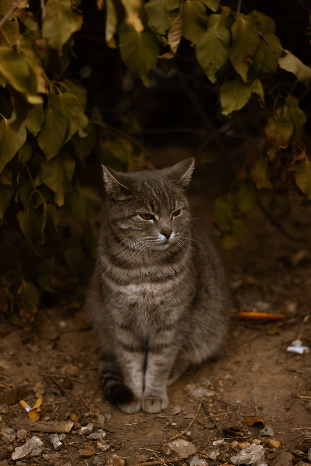 silver tabby cat on ground