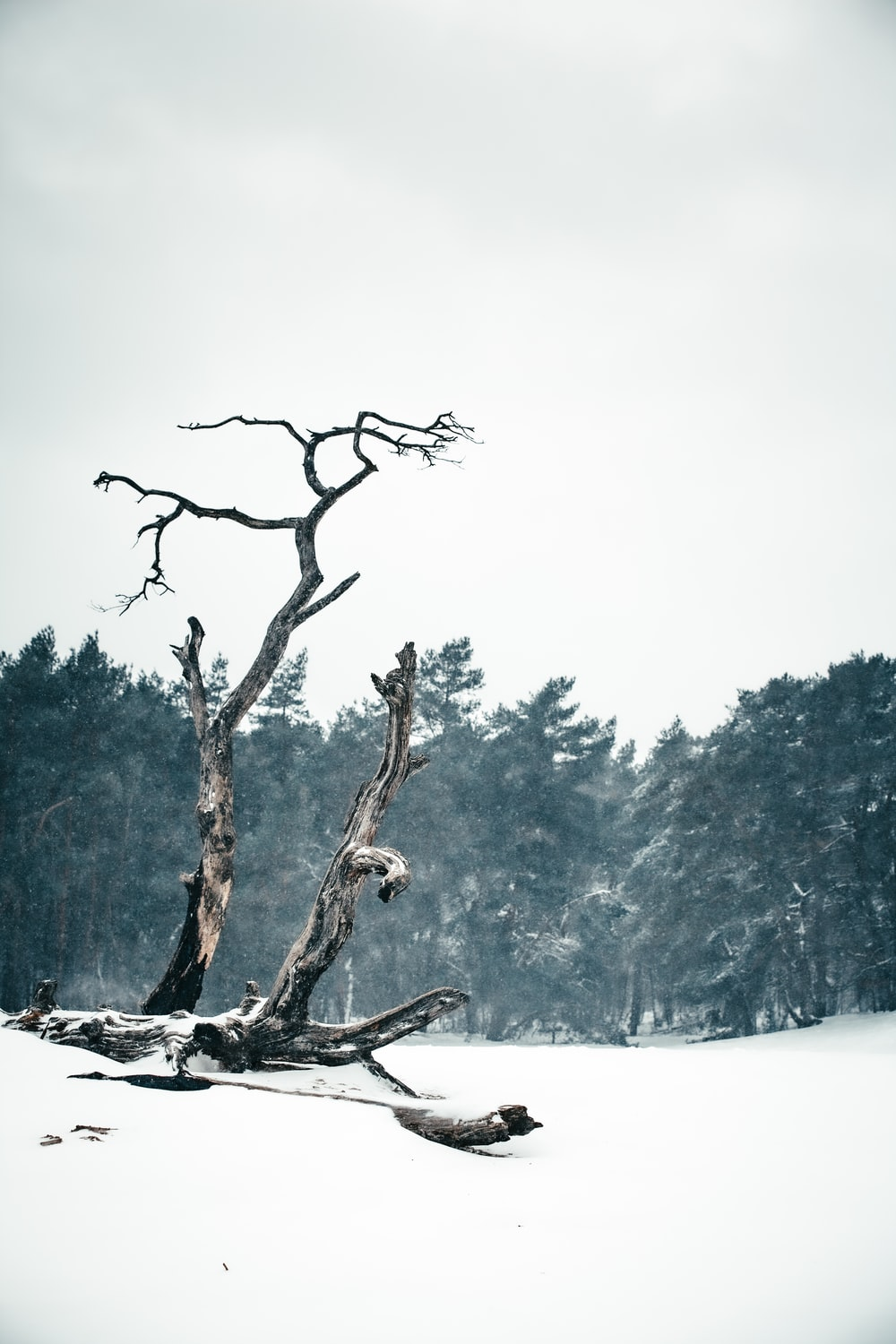 brown tree branch on snow covered ground