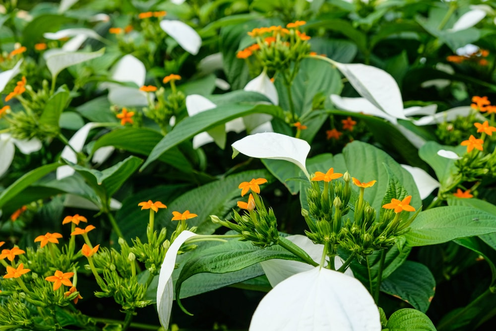 white and orange flowers with green leaves