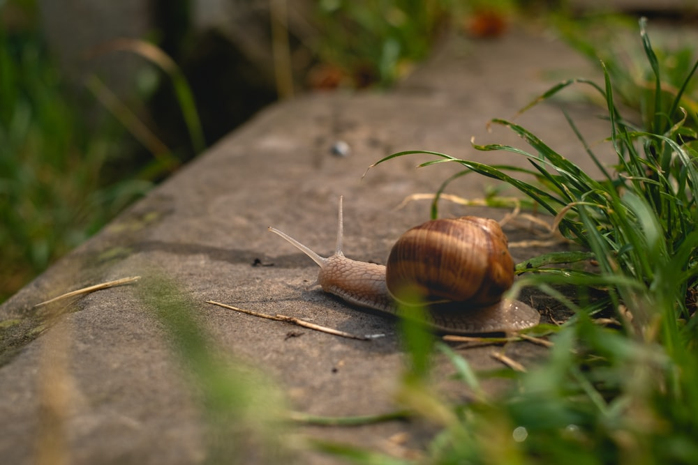 brown snail on brown concrete floor