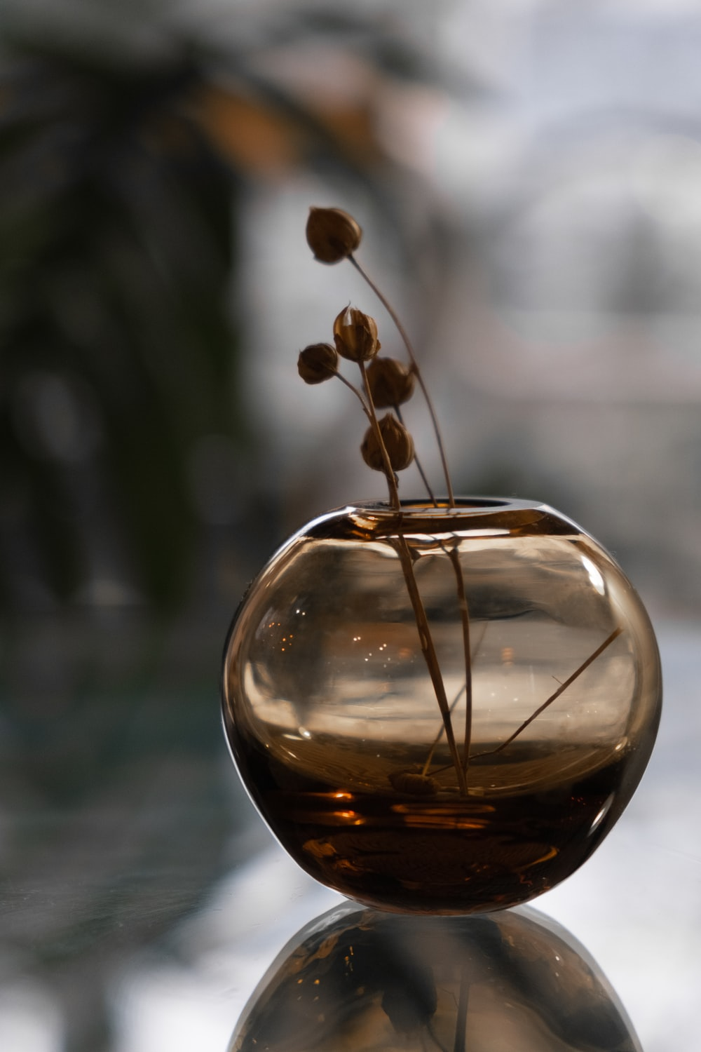 clear glass ball with brown plant