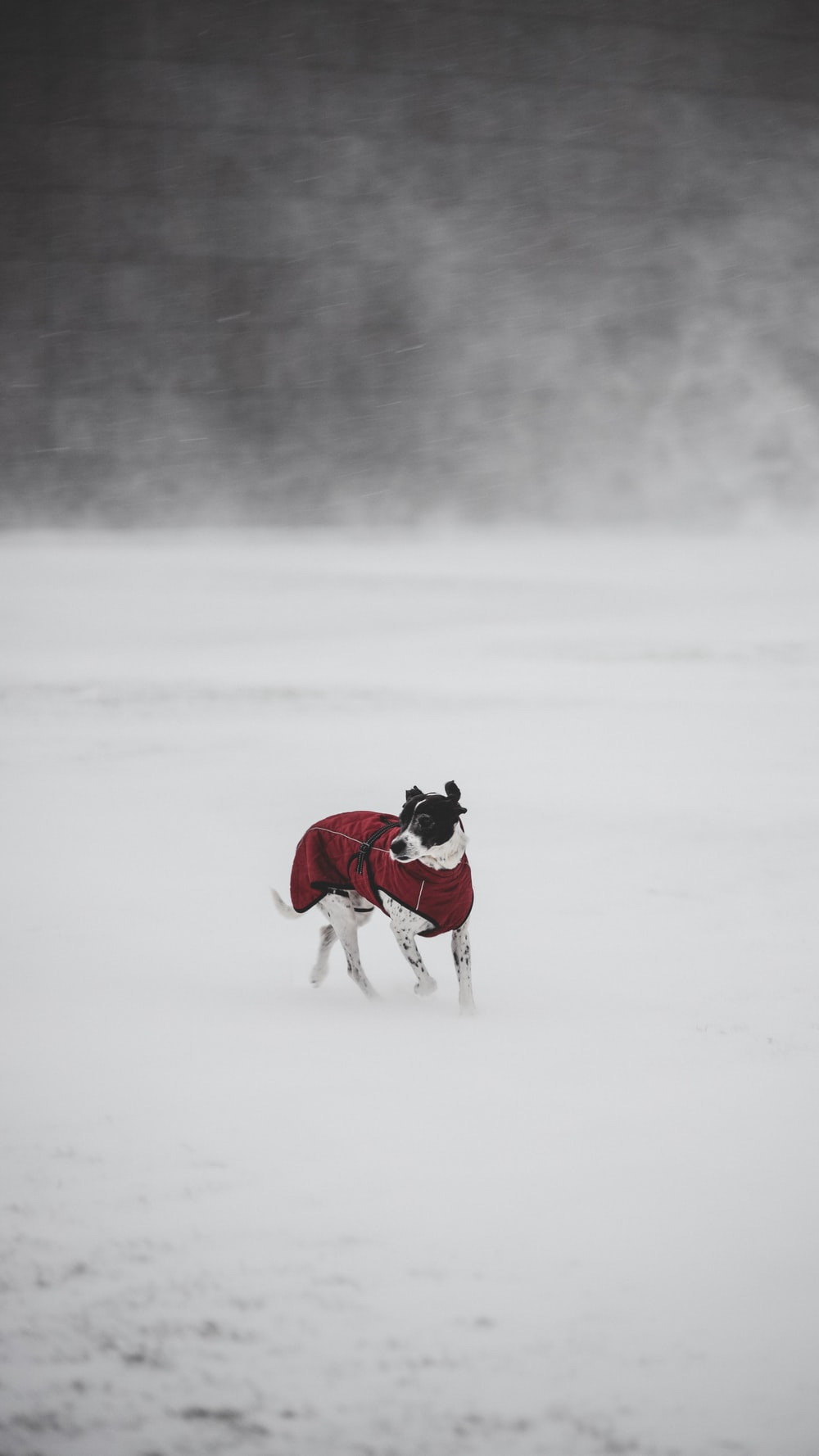 woman in pink jacket and white pants holding black and white short coat dog on snow