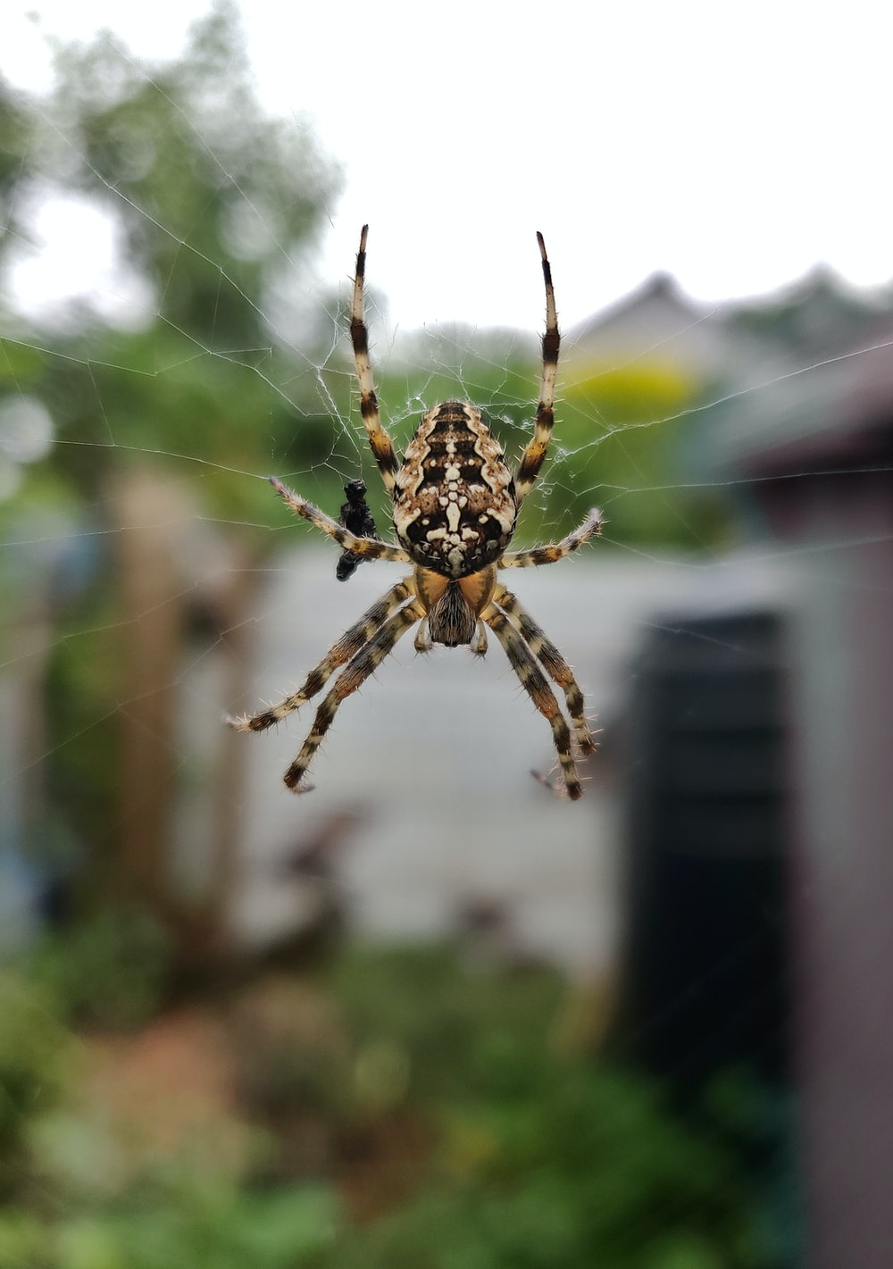 brown and black spider on web during daytime