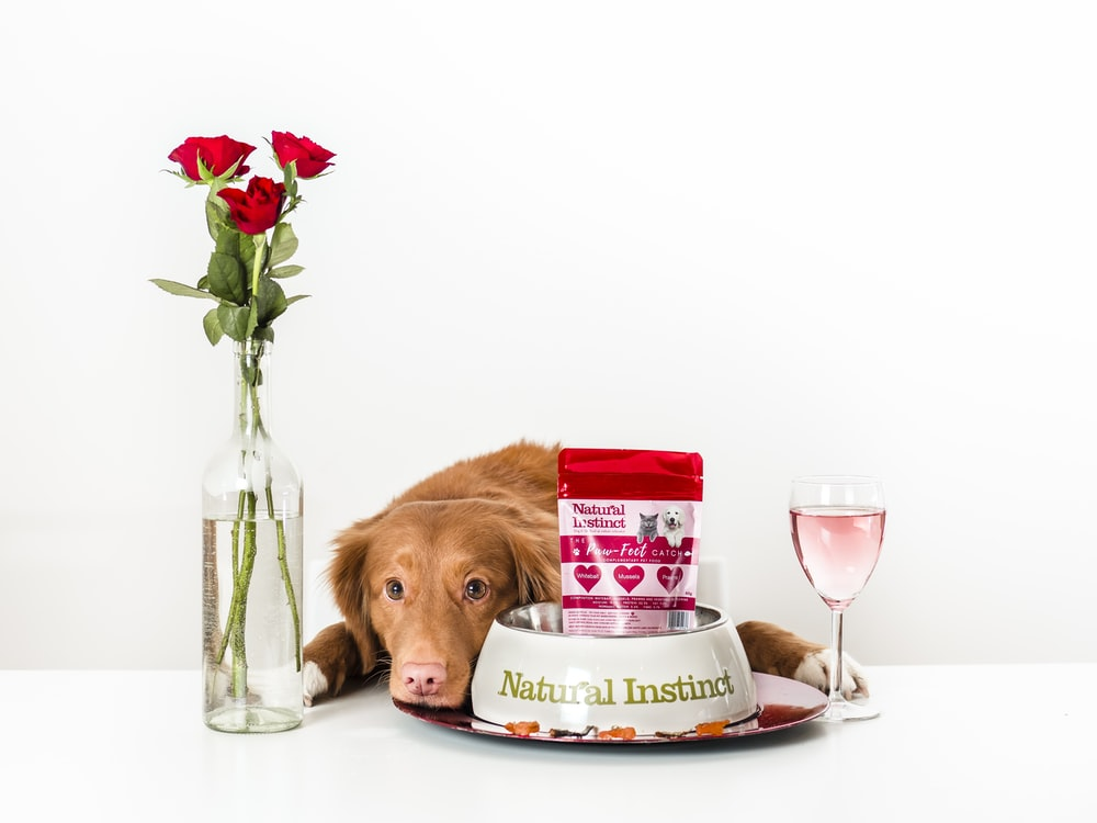 brown short coated dog on white ceramic plate beside clear glass vase