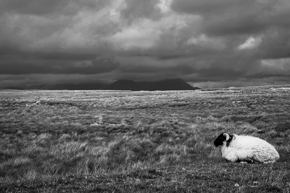 grayscale photo of a man in a field