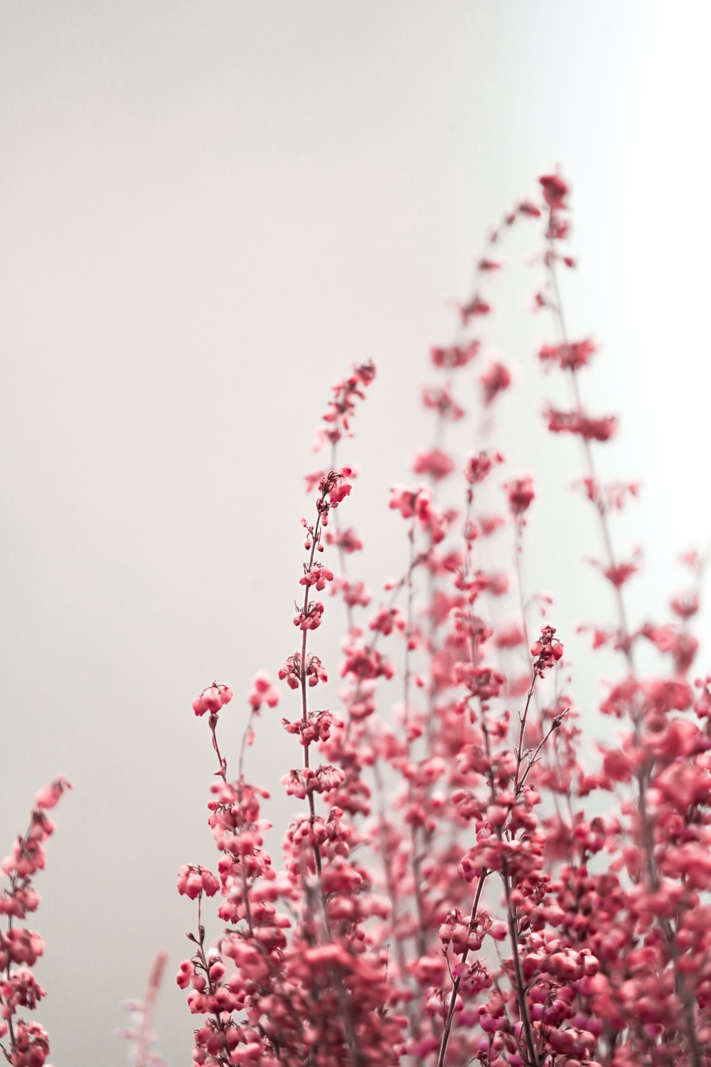 Pink Aesthetic Pictures Download Free Images On Unsplash This post may contain affiliate links, which means that i get a commission if you decide to make a purchase. pink aesthetic pictures download free