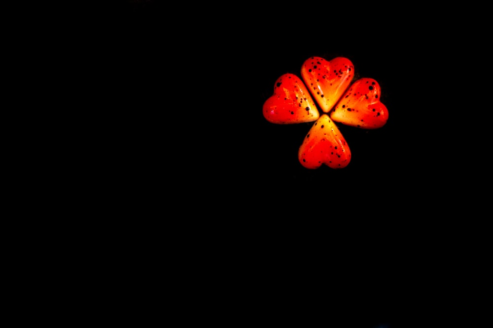 red and yellow flower with black background