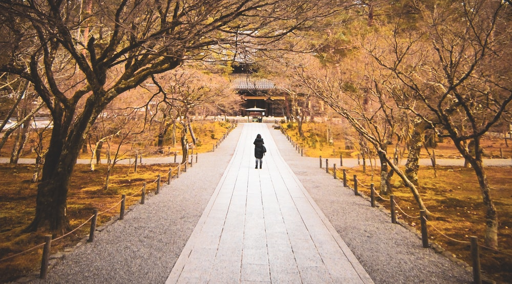 person walking on gray concrete pathway between brown trees during daytime