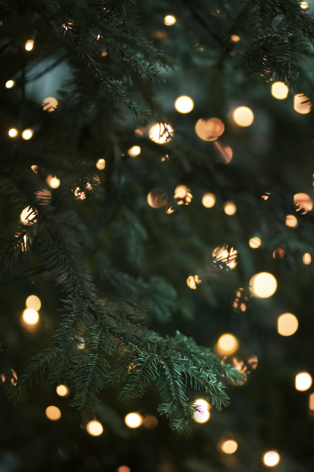 green christmas tree with string lights
