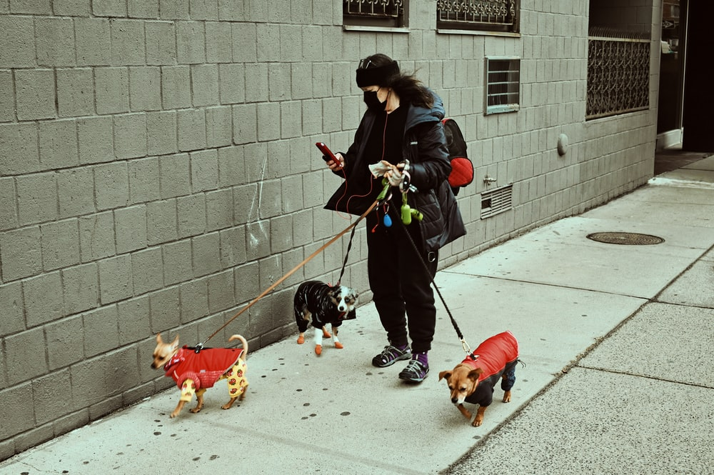 woman in black jacket and black pants holding black and white short coated dog