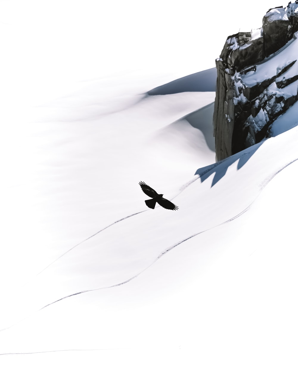 black bird flying over snow covered mountain during daytime