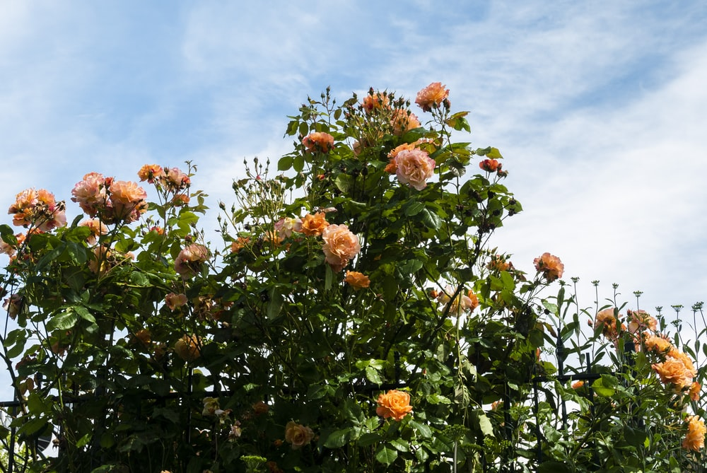 orange flowers with green leaves under blue sky during daytime
