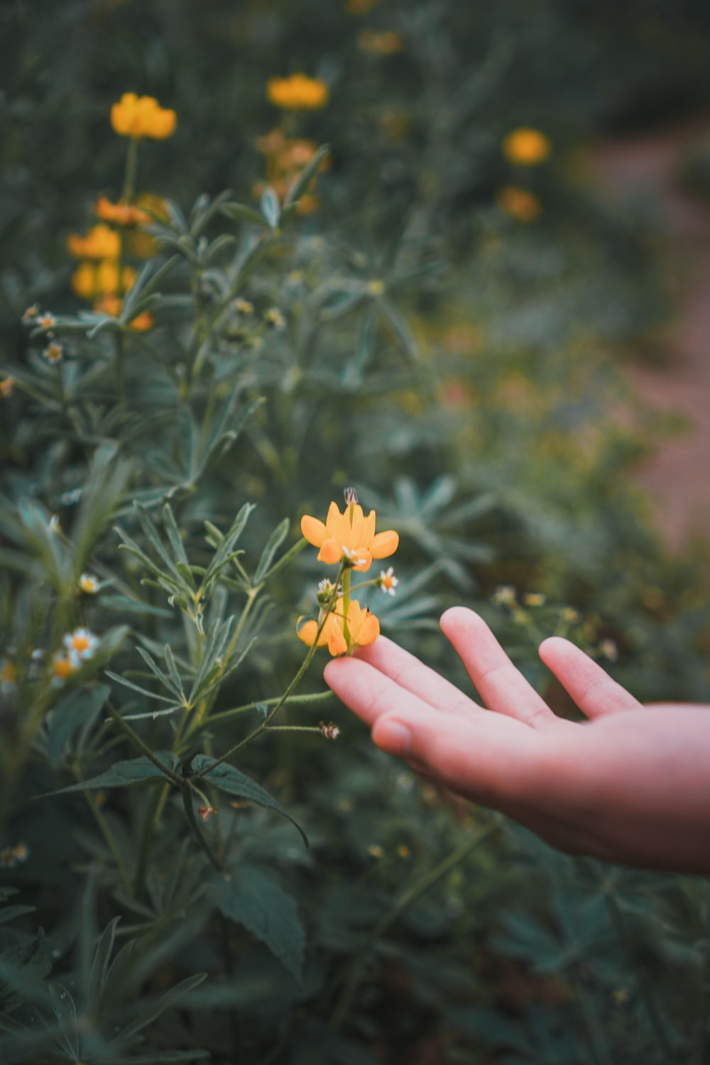 yellow flower in persons hand