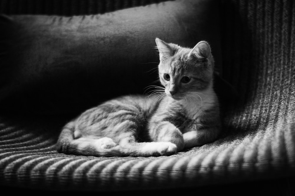 grayscale photo of tabby cat lying on bed