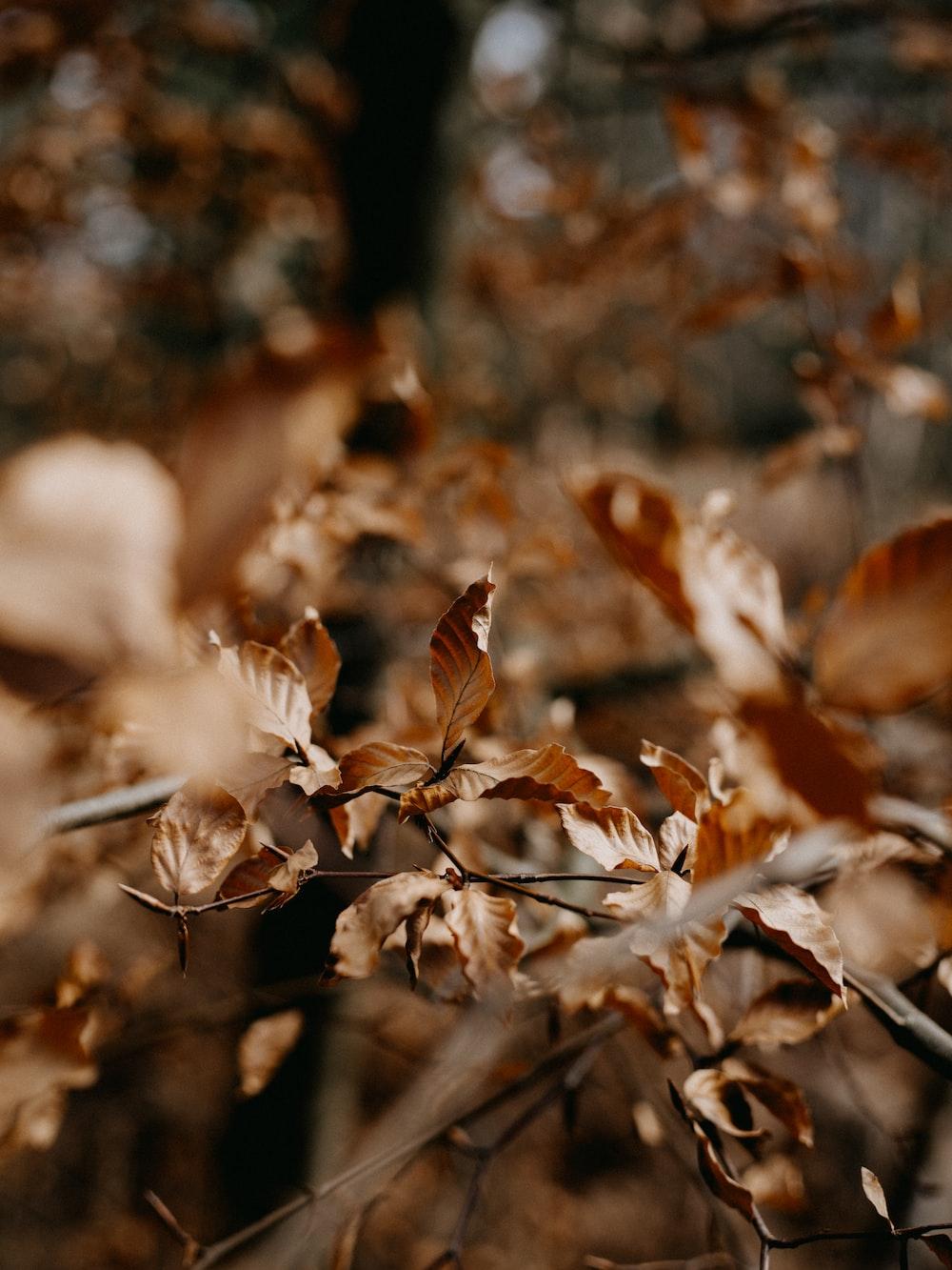 brown dried leaves in tilt shift lens