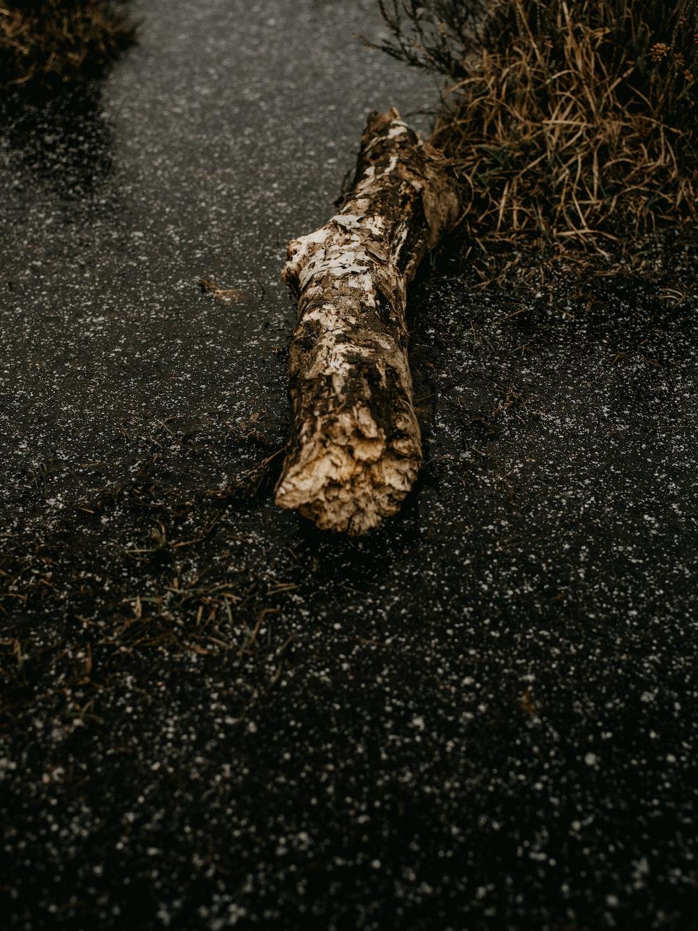 brown tree trunk on black sand