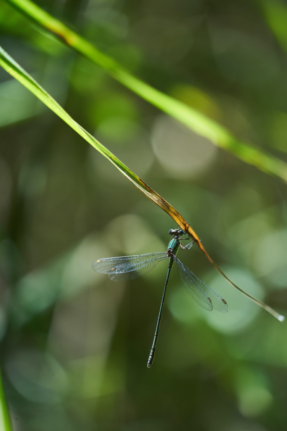 black and yellow dragonfly on green grass during daytime