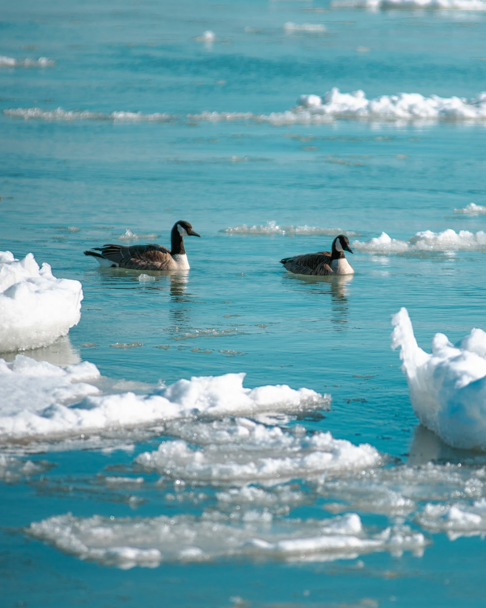 white and black duck on white snow during daytime