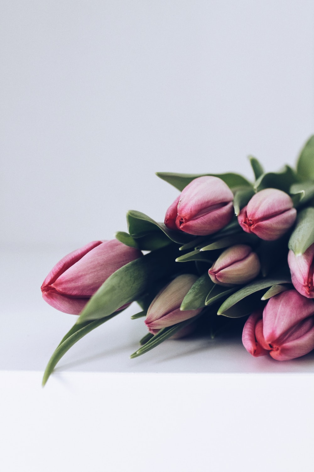 pink tulips on white table