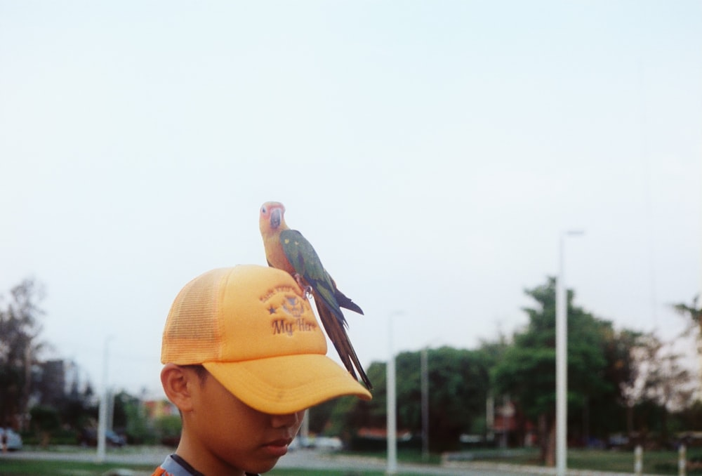 black bird on yellow hat
