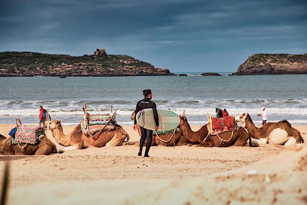man in blue shirt riding brown camel on beach during daytime